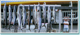 Shark, King Mackerel, Spanish Mackerel