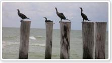 Site seeing, bird watching